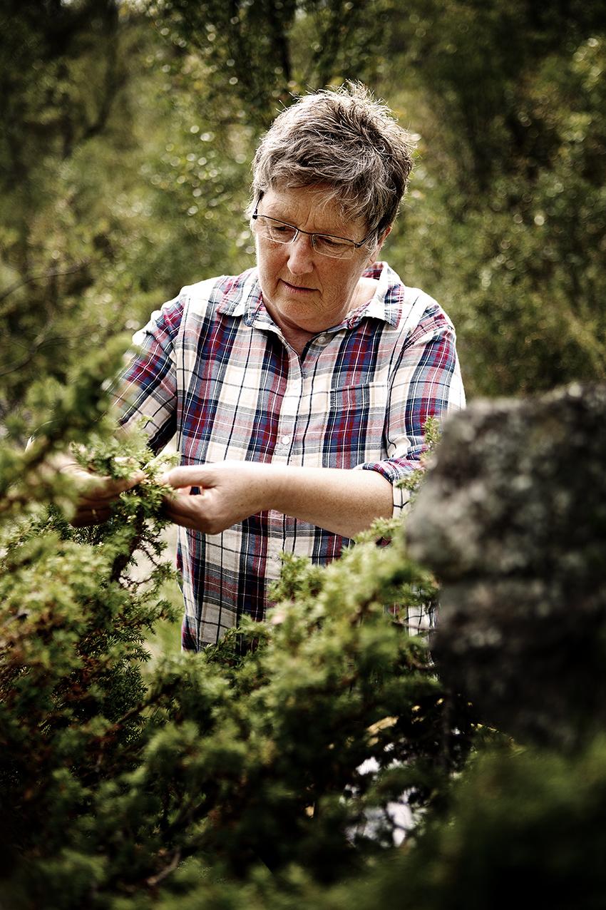 Birgit Svendsen